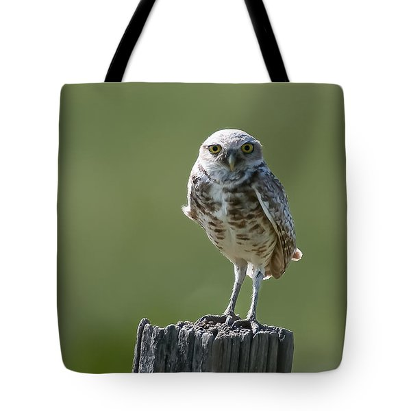 Tote Bag featuring the photograph Burrowing Owl by Gary Lengyel