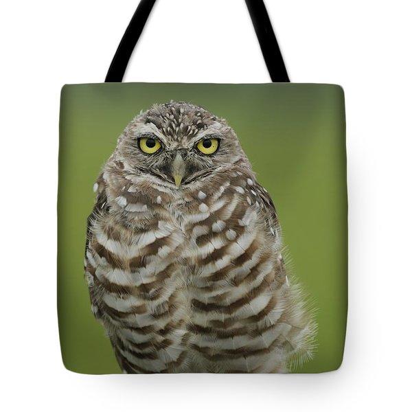 Burrowing Owl Lookout Tote Bag