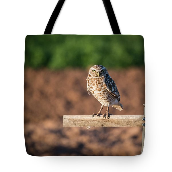 Burrowing Owl On A Perch Tote Bag