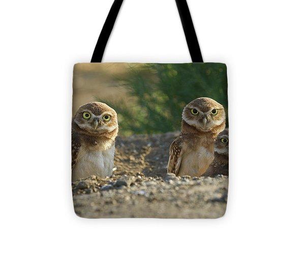 Burrowing Owls Tote Bag by Doug Herr