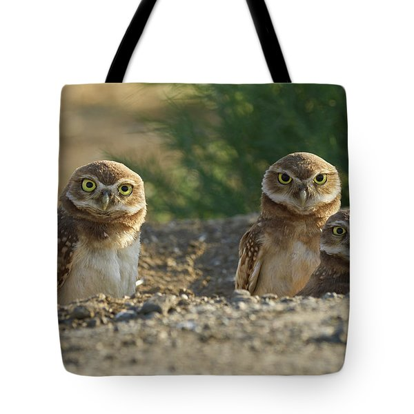 Burrowing Owls Tote Bag