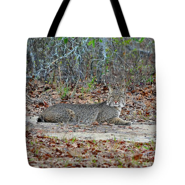 Tote Bag featuring the photograph Bushed Bobcat by Al Powell Photography USA