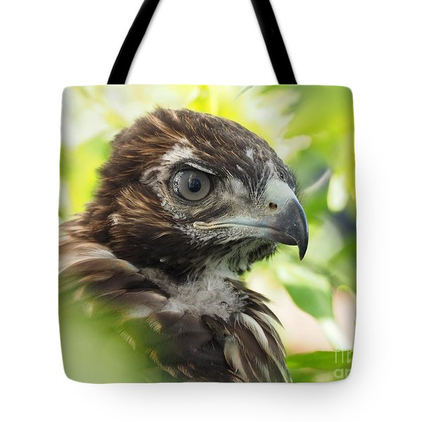 Buteo Jamaicensis Tote Bag