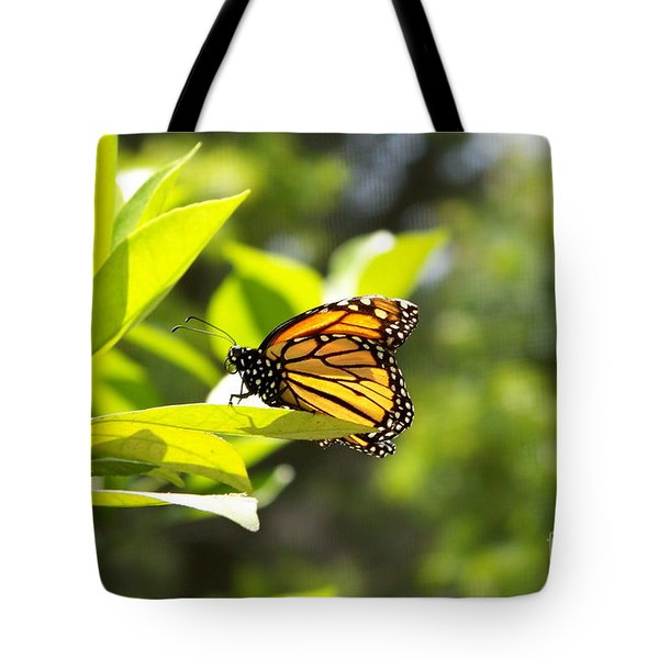 Tote Bag featuring the photograph Butterfly In Sunlight by Carol  Bradley