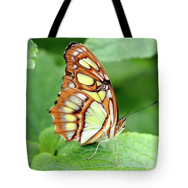 Butterfly On Leaf Tote Bag by Meta Gatschenberger