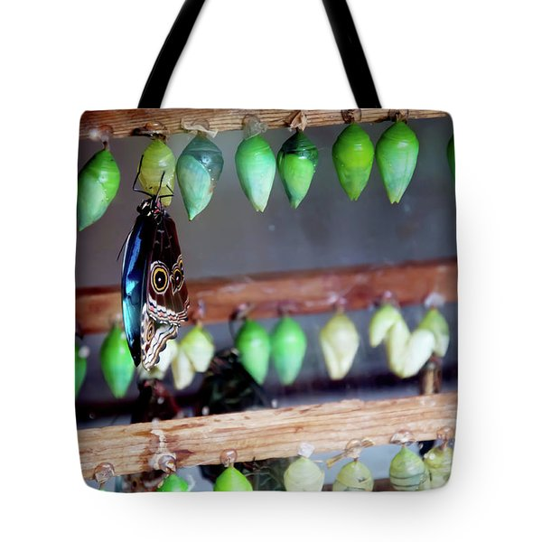 Butterfly With Butterfly Chrysalis 1 Tote Bag by Andee Design