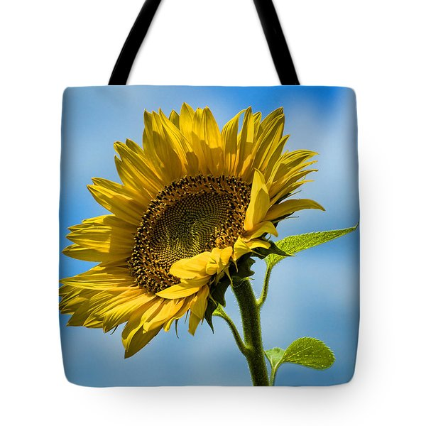 Buttonwood Sunflower 2 Tote Bag