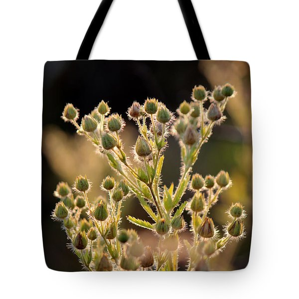 Tote Bag featuring the photograph By Incident Light by Silke Brubaker