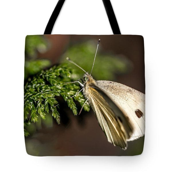 Cabbage Butterfly On Evergreen Bush Tote Bag