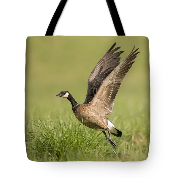 Cackling Goose Tote Bag by Angie Vogel