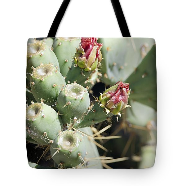 Tote Bag featuring the photograph Cactus Flower Buds by Anne Rodkin