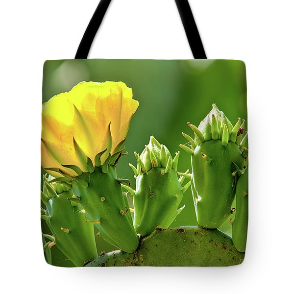 Tote Bag featuring the photograph Cactus Flower On A Cactus Plant by Dan Carmichael