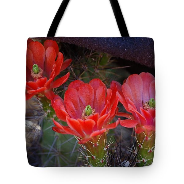 Tote Bag featuring the photograph Cactus Flowers by Frank Stallone