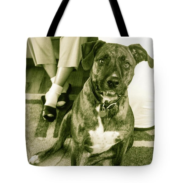 Tote Bag featuring the photograph Caeser 6 by Robin Coaker
