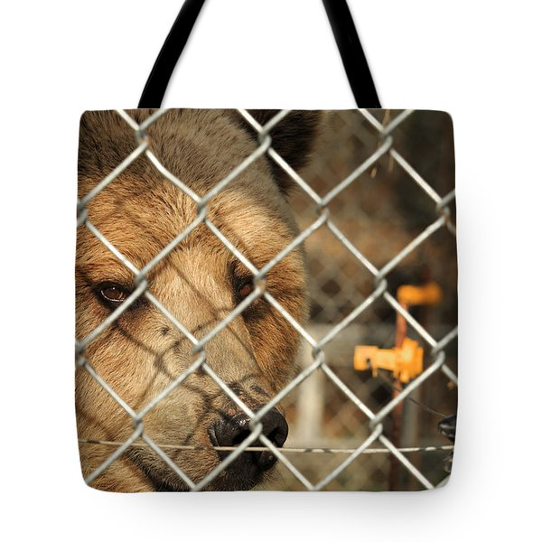 Caged Bear Tote Bag
