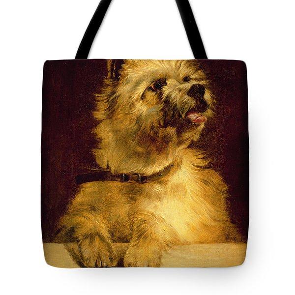 Cairn Terrier   Tote Bag by George Earl