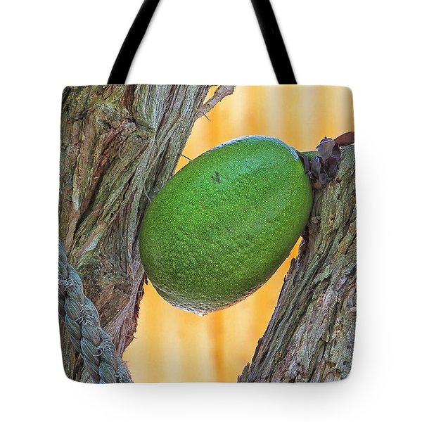Tote Bag featuring the photograph Calabash Fruit by Bill Barber