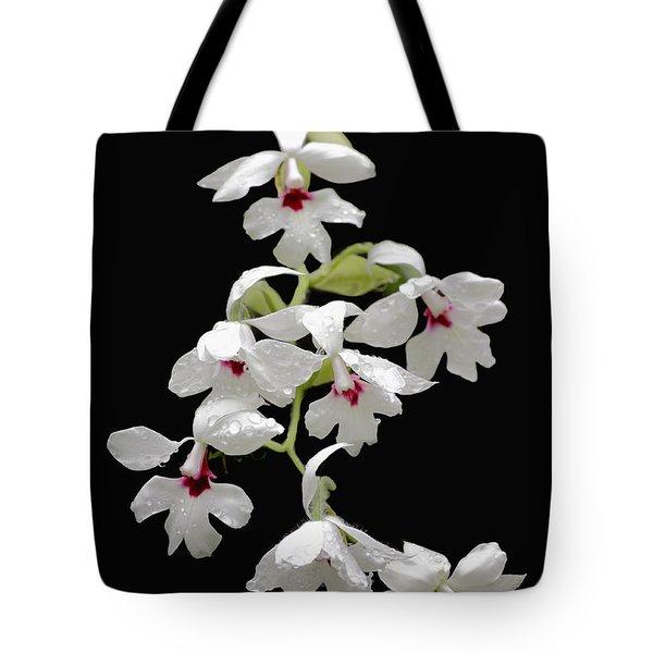 Calanthe Vestita Orchid Tote Bag