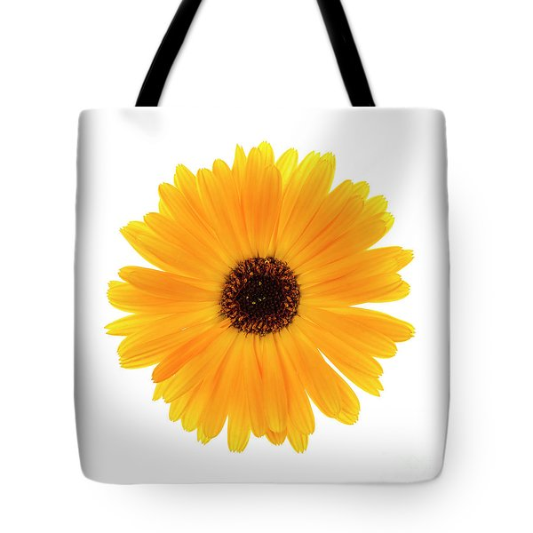 Tote Bag featuring the photograph Calendula Flower by Elena Elisseeva