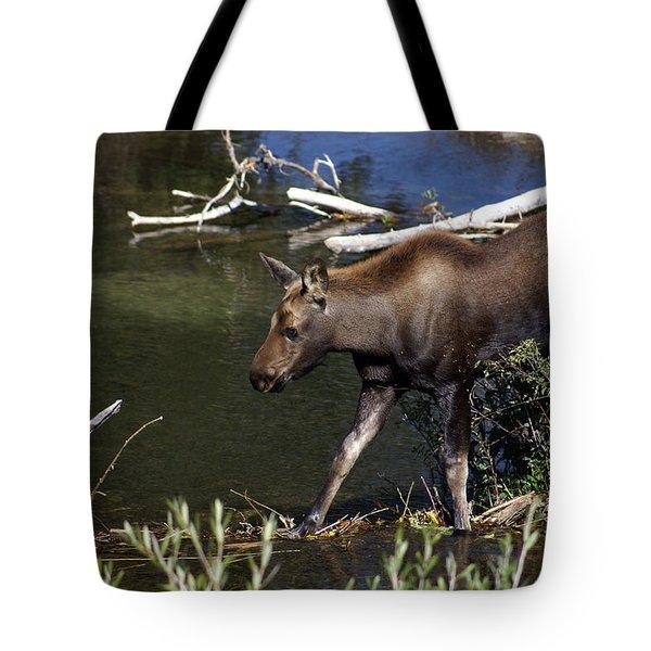 Calf Moose Tote Bag by Marty Koch
