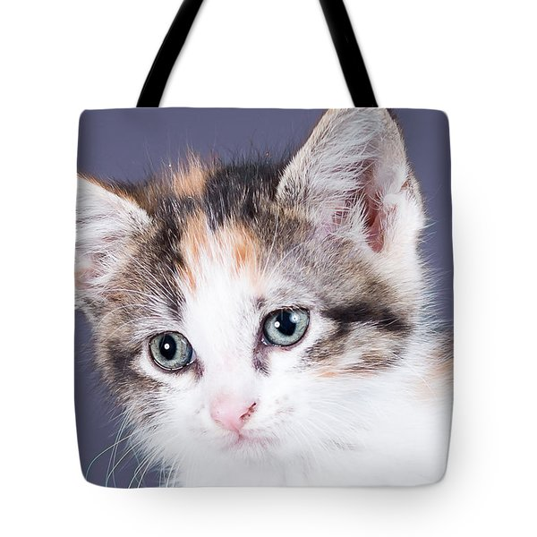 Calico Closeup Tote Bag