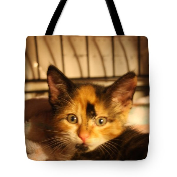 Calico Kitten Tote Bag by Wendy Coulson