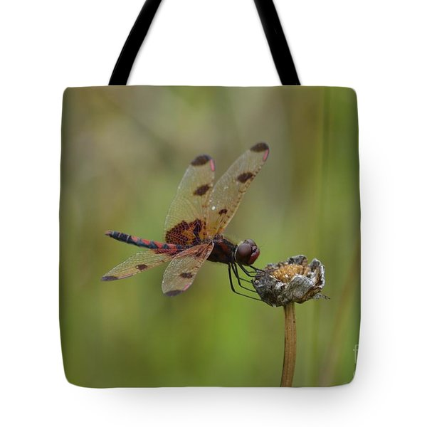 Calico Pennant Tote Bag by Randy Bodkins
