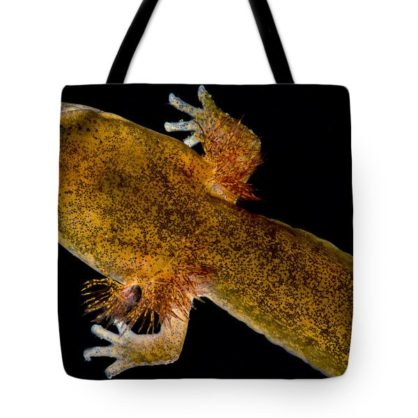 California Giant Salamander Larva Tote Bag