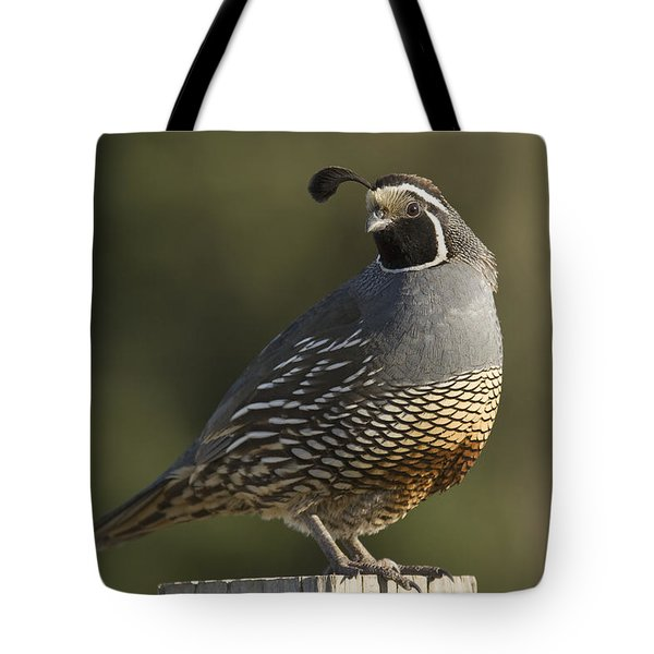 California Quail Male Santa Cruz Tote Bag by Sebastian Kennerknecht
