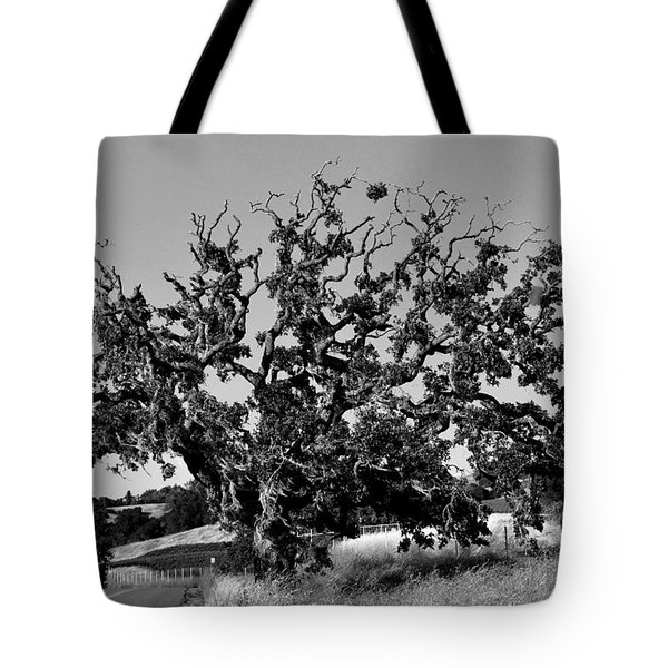 California Roadside Tree - Black And White Tote Bag by Matt Harang