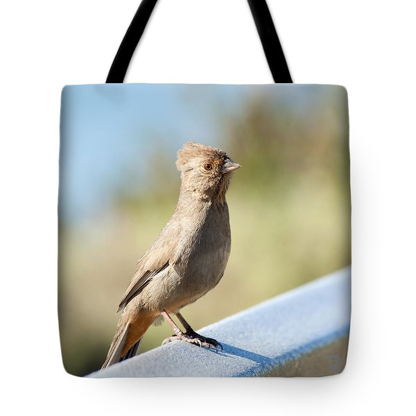 California Towhee ? Tote Bag by Daniel Hebard
