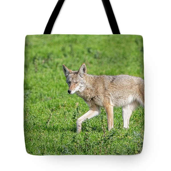 California Walk  Tote Bag