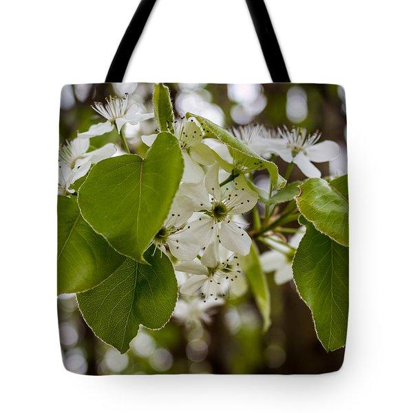Callery Pear Tree Bloom Tote Bag