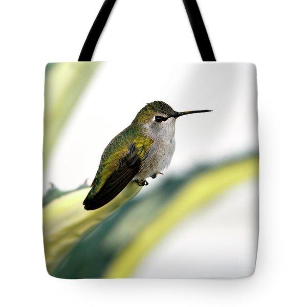 Calliope Hummingbird On Agave Tote Bag