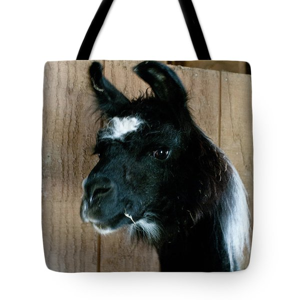 Tote Bag featuring the photograph Camelid 3 by Catherine Sobredo