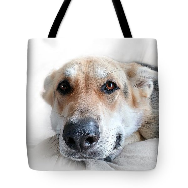 Tote Bag featuring the photograph Can I Stay Here by E B Schmidt