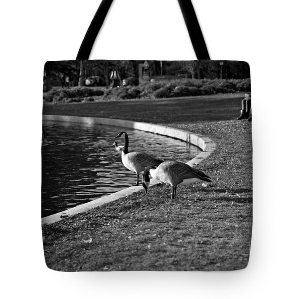 Tote Bag featuring the photograph Canada Geese by Cendrine Marrouat
