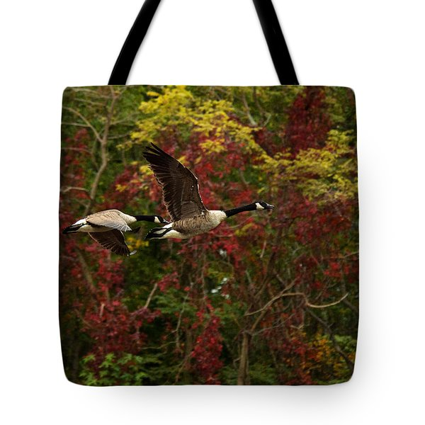Canada Geese In Autumn Tote Bag by Angel Cher
