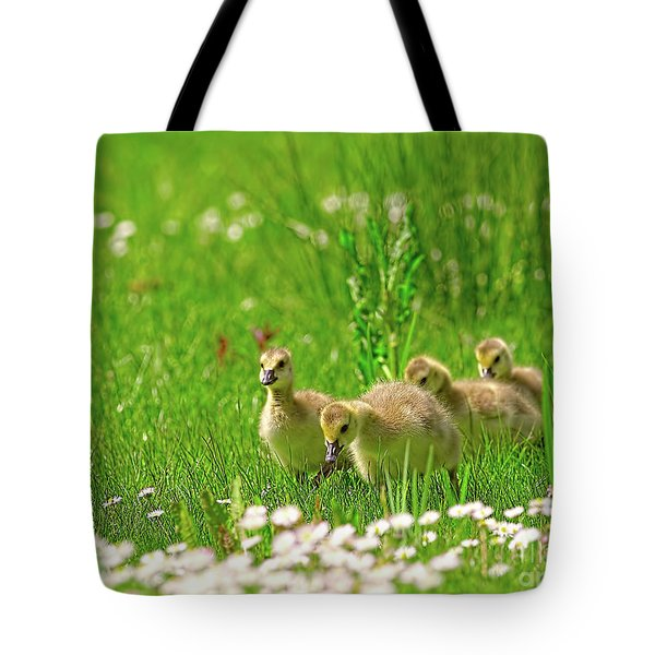 Tote Bag featuring the photograph Canada Goose Goslings In A Field Of Daisies by Sharon Talson