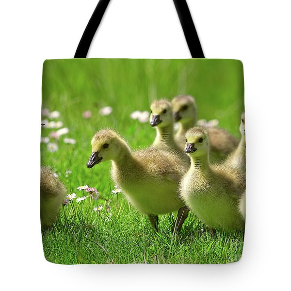 Tote Bag featuring the photograph Canada Goose Goslings by Sharon Talson