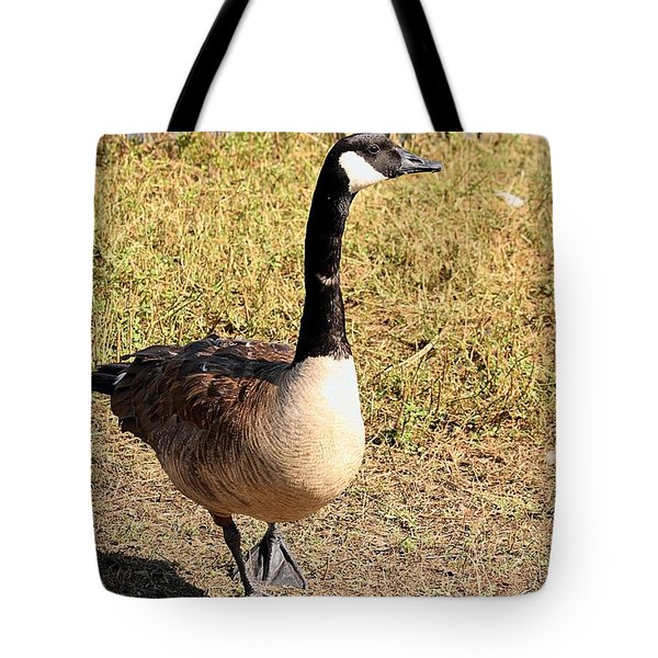 Tote Bag featuring the photograph Canada Goose On A Stroll by Sheila Brown