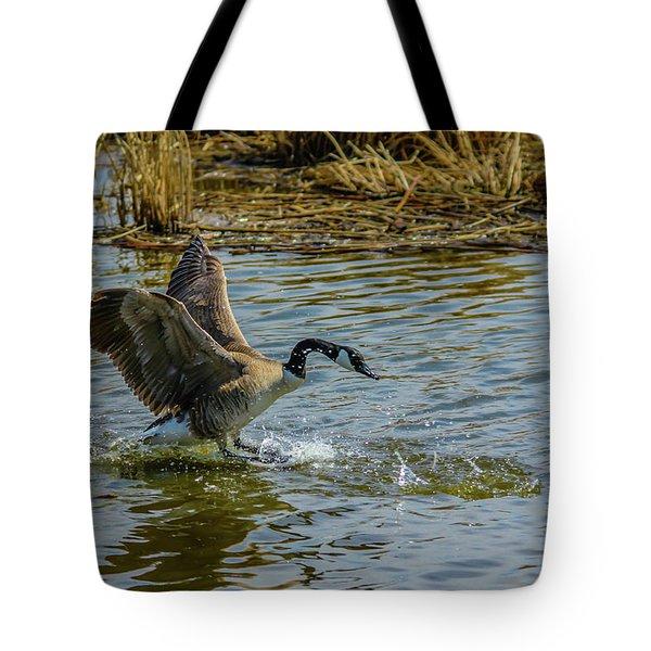 Canada Goose Takes Flight, Frank Lake, Alberta, Canada Tote Bag