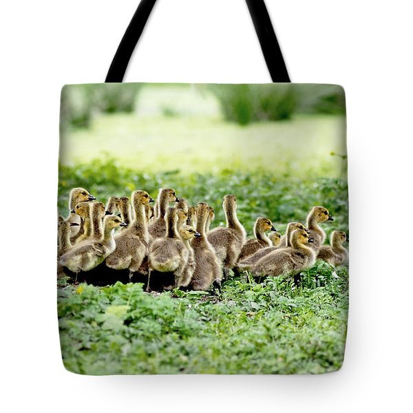 Canada Gosling Daycare Tote Bag