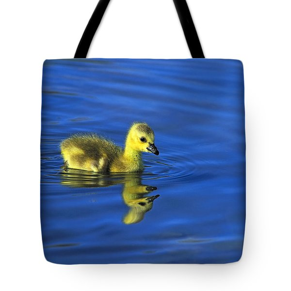 Canada Gosling Goes For A Swim Tote Bag