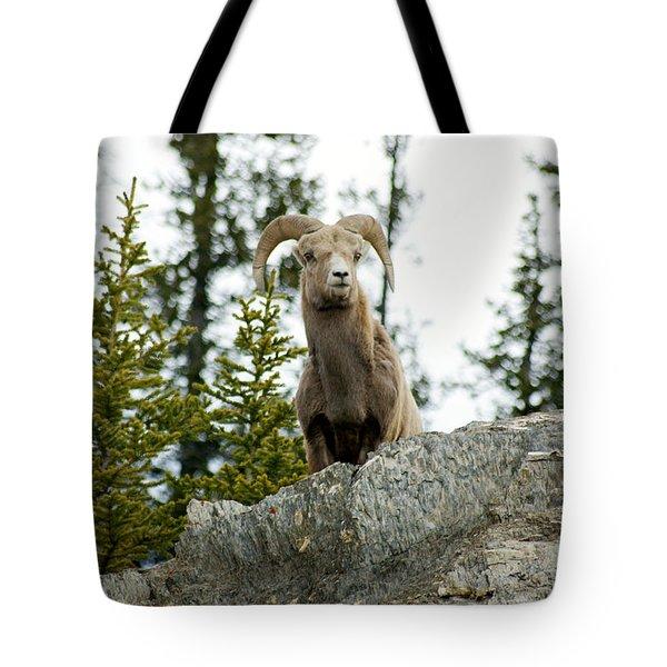Canadian Bighorn Sheep Tote Bag