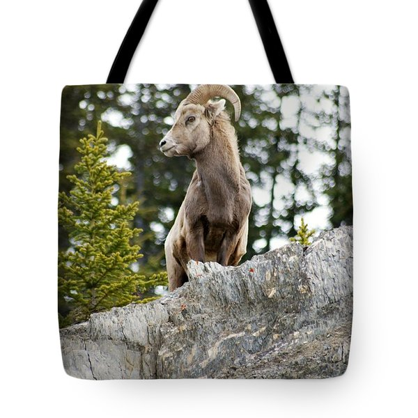 Tote Bag featuring the photograph Canadian Bighorn Side Profile by David Birchall