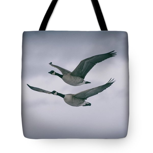 Canadian Geese In Flight Tote Bag by Jason Coward