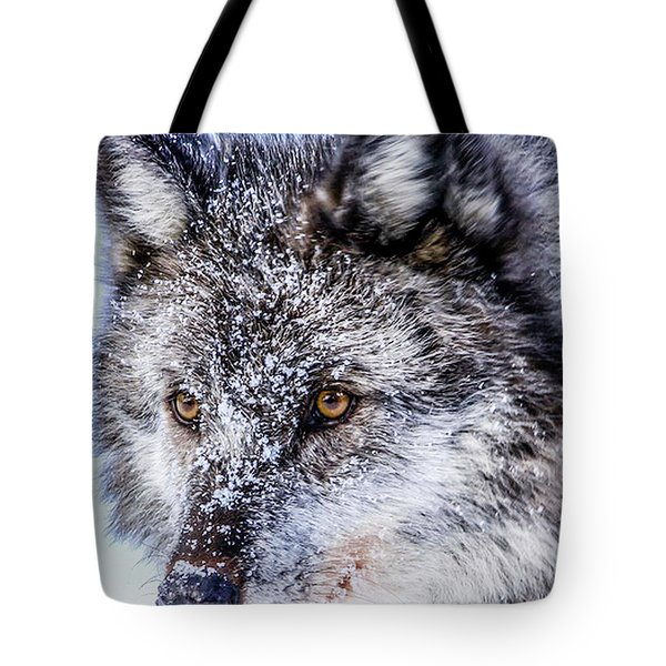 Canadian Grey Wolf In Portrait, British Columbia, Canada Tote Bag