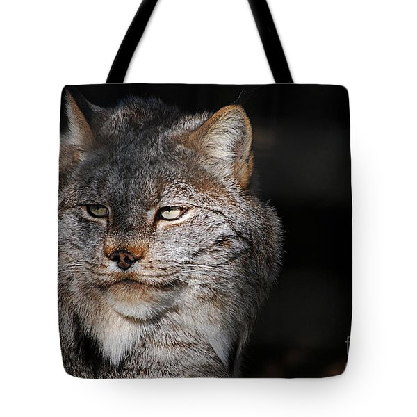 Canadian Lynx  20130107_57 Tote Bag by Tina Hopkins