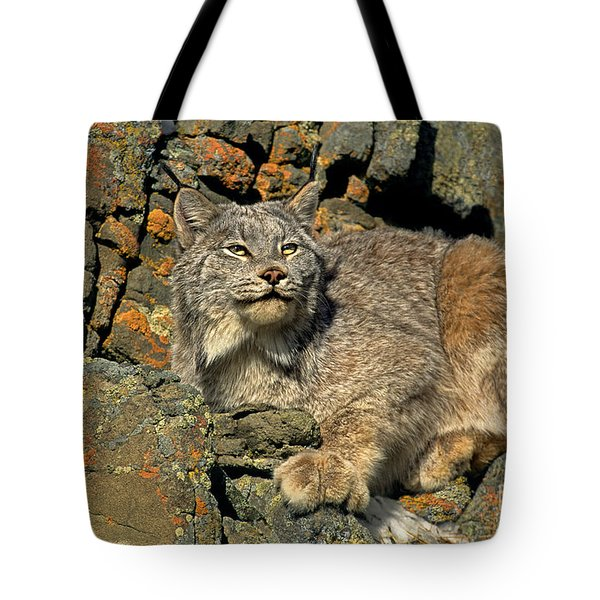Tote Bag featuring the photograph Canadian Lynx On Lichen-covered Cliff Endangered Species by Dave Welling
